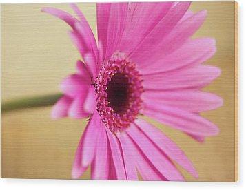 Pretty Pink Gerbera Flower Wood Print by Michaela Gunter