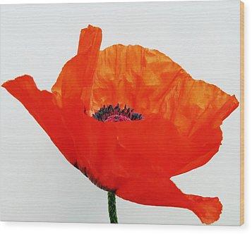 Pretty Poppy Wood Print by Ramona Johnston