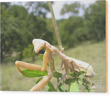 Wood Print featuring the photograph Preying Mantis by Mark Robbins