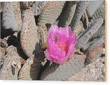 Prickly Pear Cactus Fertilized By Honey Bee Wood Print by Gary Whitton