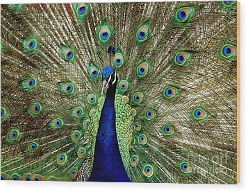 Wood Print featuring the photograph Pride  by Johanne Peale