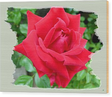 Prince Charles Rose Wood Print by Will Borden