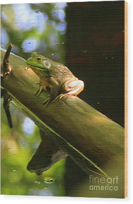 Prince In Frogs Clothing Wood Print