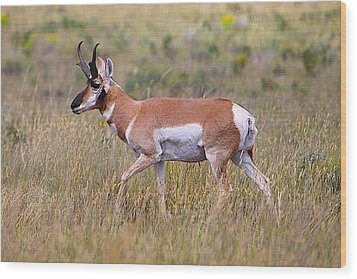 Pronghorn Buck Wood Print by Drusilla Montemayor