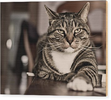 Proud Cat Wood Print by Olga Tremblay