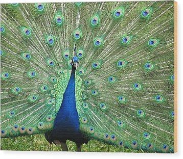 Proud Peacock Wood Print by Bonnie Muir