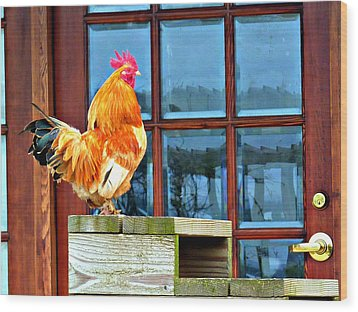 Proud Rooster Wood Print by Jo Sheehan