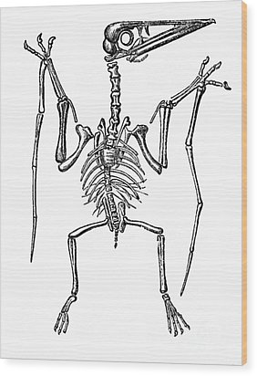 Pterodactylus, Extinct Flying Reptile Wood Print by Science Source