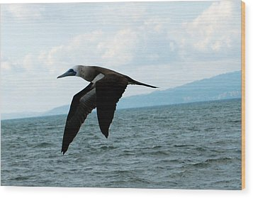 Puerto Vallarta - A Bird In Flight  Wood Print by Harvey Barrison