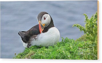 Wood Print featuring the photograph Puffin by Lynn Bolt
