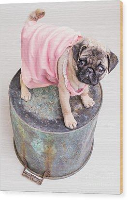 Pug Puppy Pink Sun Dress Wood Print by Edward Fielding