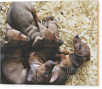 Puppies Wood Print by Brian  Seidenfrau