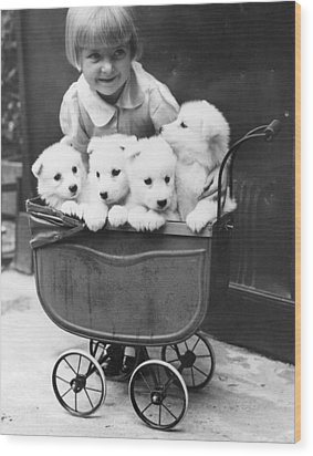 Puppies In A Pram Wood Print by Fox Photos