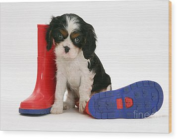 Puppies With A Childs Rain Boots Wood Print by Jane Burton