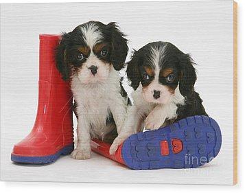 Puppies With Rain Boats Wood Print by Jane Burton