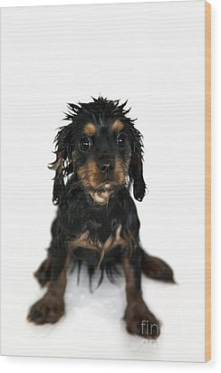Puppy Bathtime Wood Print by Jane Rix