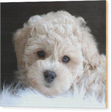 Puppy Dog Eyes Wood Print by Lisa  DiFruscio