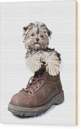 Puppy In A Boot Wood Print by Chad Latta