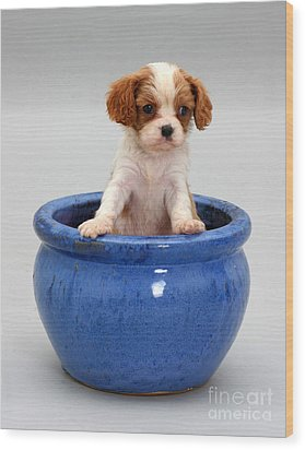 Puppy In A Pot Wood Print by Jane Burton