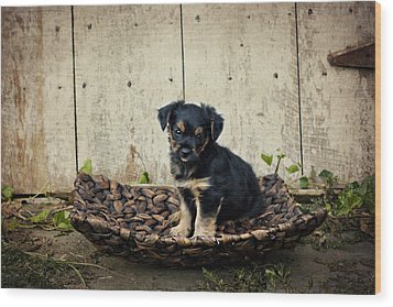 Puppy In A Tray Wood Print