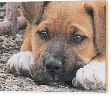 Puppy Love Wood Print by Tammy Herrin