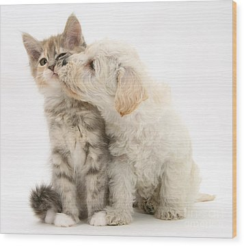 Puppy Nuzzles Kitten Wood Print by Jane Burton