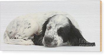 Puppy Sleeping Wood Print by Mark Taylor