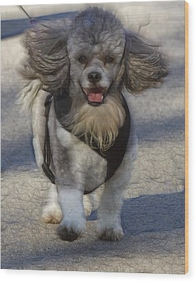Puppy Walk Wood Print