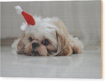 Puppy Wearing Santa Hat Wood Print by Sonicloh