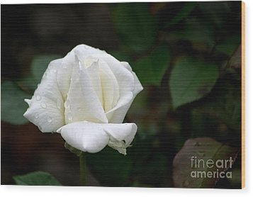 Wood Print featuring the photograph Pure As Snow by Living Color Photography Lorraine Lynch