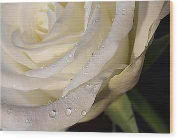 Wood Print featuring the photograph Purity by Shirley Mitchell