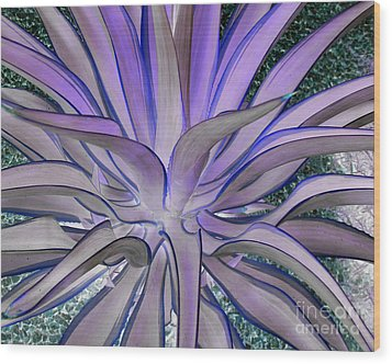 Purple Aloe Wood Print