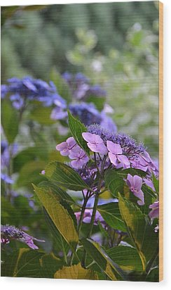 Purple And Green Wood Print