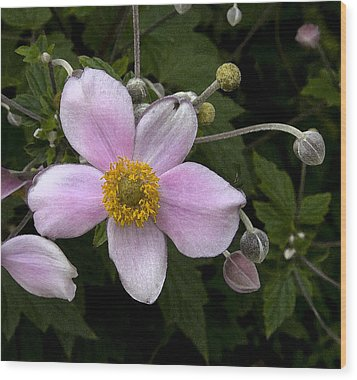 Wood Print featuring the photograph Purple Anemone II by Michael Friedman