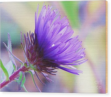 Wood Print featuring the photograph Purple Aster  by Michele Penner
