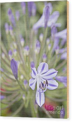 Purple Burst Wood Print