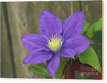 Wood Print featuring the photograph Purple Clematis by Denise Pohl
