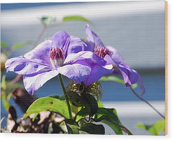 Wood Print featuring the photograph Purple Clematis by Linda Cox