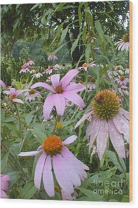 Wood Print featuring the photograph Purple Coneflowers by Vonda Lawson-Rosa
