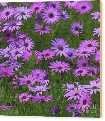 Purple Daisies Square Wood Print by Carol Groenen