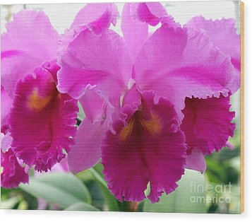 Wood Print featuring the photograph Purple Explosion by Debbie Hart