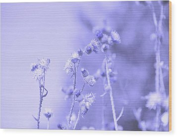 Purple Field Wood Print