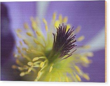 Purple Flower Center Wood Print by Mark J Seefeldt
