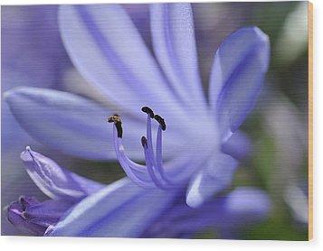 Purple Flower Close-up Wood Print by Sami Sarkis