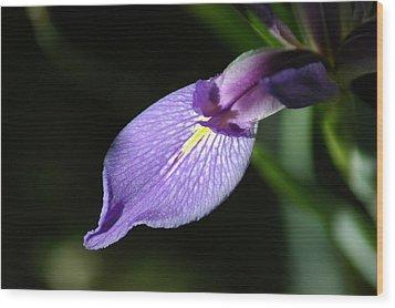 Japanese Iris Petal Wood Print