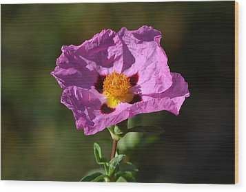 Wood Print featuring the photograph Purple Flower by Rima Biswas
