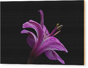 Purple Flower Wood Print by Ron Smith