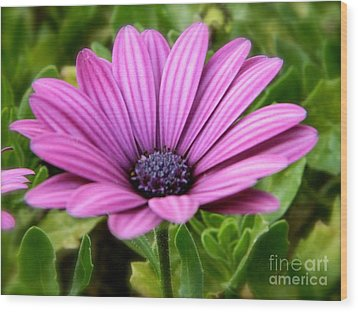 Purple Flower Wood Print by Sara  Mayer