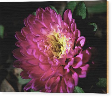 Purple Flower Wood Print by Sumit Mehndiratta