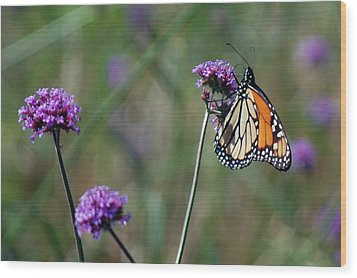 Purple Flower With Butterfly Wood Print by Harvey Barrison